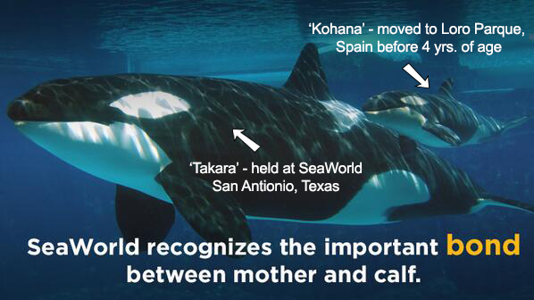 SeaWorld-separates-moms-and-calves